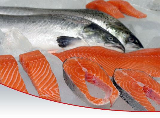 Hasil gambar untuk 9 Manfaat Ikan Salmon Yang Kita Konsumsi