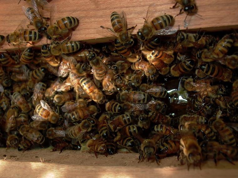 juni 2012 honningsø