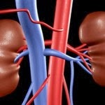 Symptoms of Acute Renal Failure