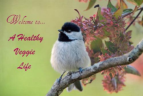 A Healthy Veggie Life