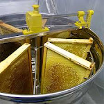 honey's extractor