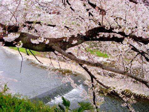 http://www.asij.ac.jp/elementary/ja... 祭り:春分の日