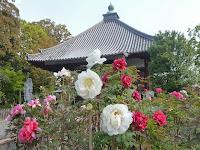 乙訓寺は七世紀ごろ推古天皇の勅命によって聖徳太子が創建した。