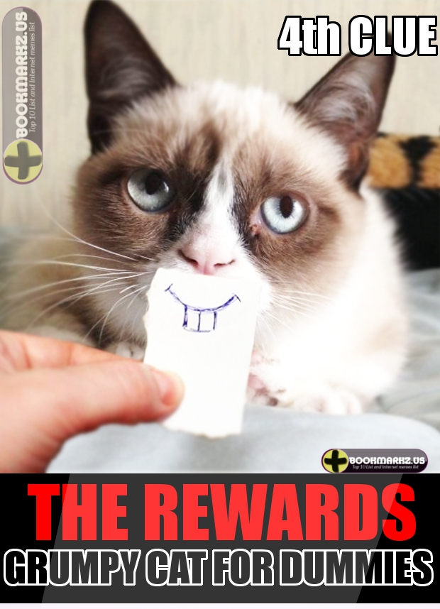 grumpy cat for dummies 5 facts about her top 10 list