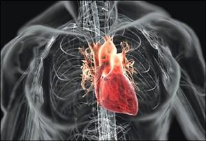 Manfaat terong sebagai makanan untuk jantung