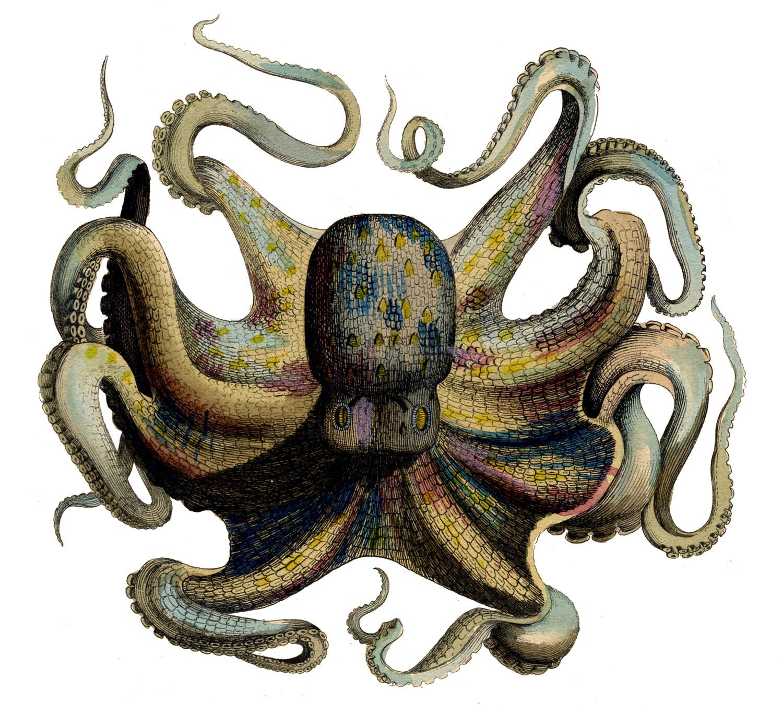 http://3.bp.blogspot.com/-feAQZAsFAxU/TrxyTmSeDyI/AAAAAAAAPKs/VHT9LCcwpJo/s1600/octopus%2Bvintage%2Bimage%2Bgraphicsfairy7.jpg