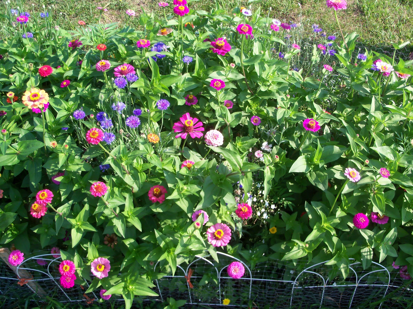 Easy Flower Garden : Flower bed how to make and plant