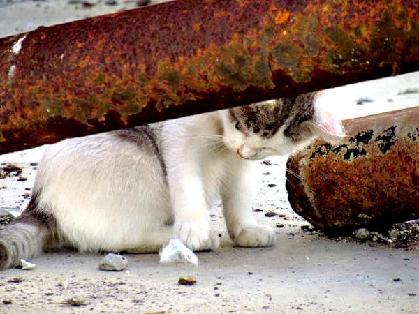 cats barbate spain
