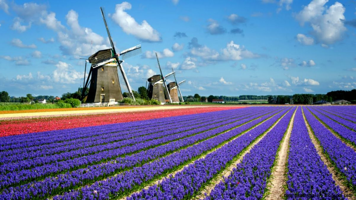Holland   The Land of Windmills Tulips and Cs   YouTube
