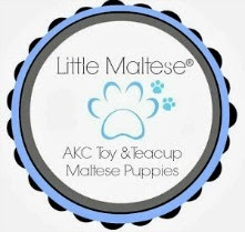 Visit us! www.littlemaltese.com