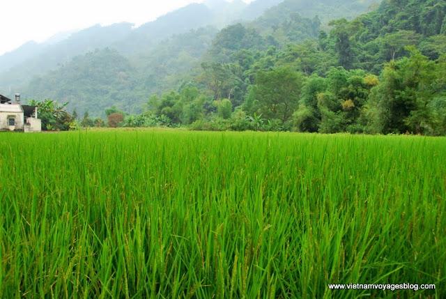 Éveiller la nature mystérieuse au village Pac Ngoi - Photo An Bui