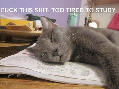 Sleepy Cat - Too Tired To Study