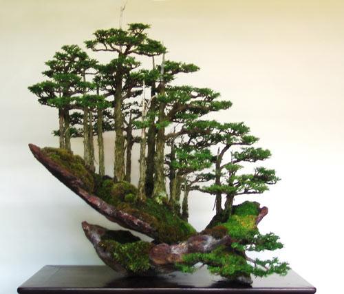langkah cara membuat bonsai secara umum cara menanam bunga rh budidaya tanaman bunga blogspot com Bonsai Wiring Techniques Bonsai Wiring Techniques