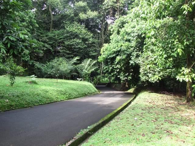 Objek Wisata Kebun Raya Bogor 4