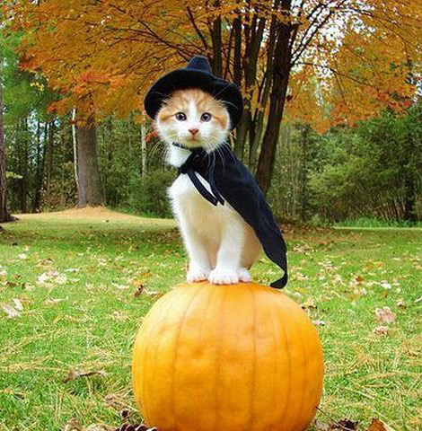 Miss Cellania: Halloween Cats