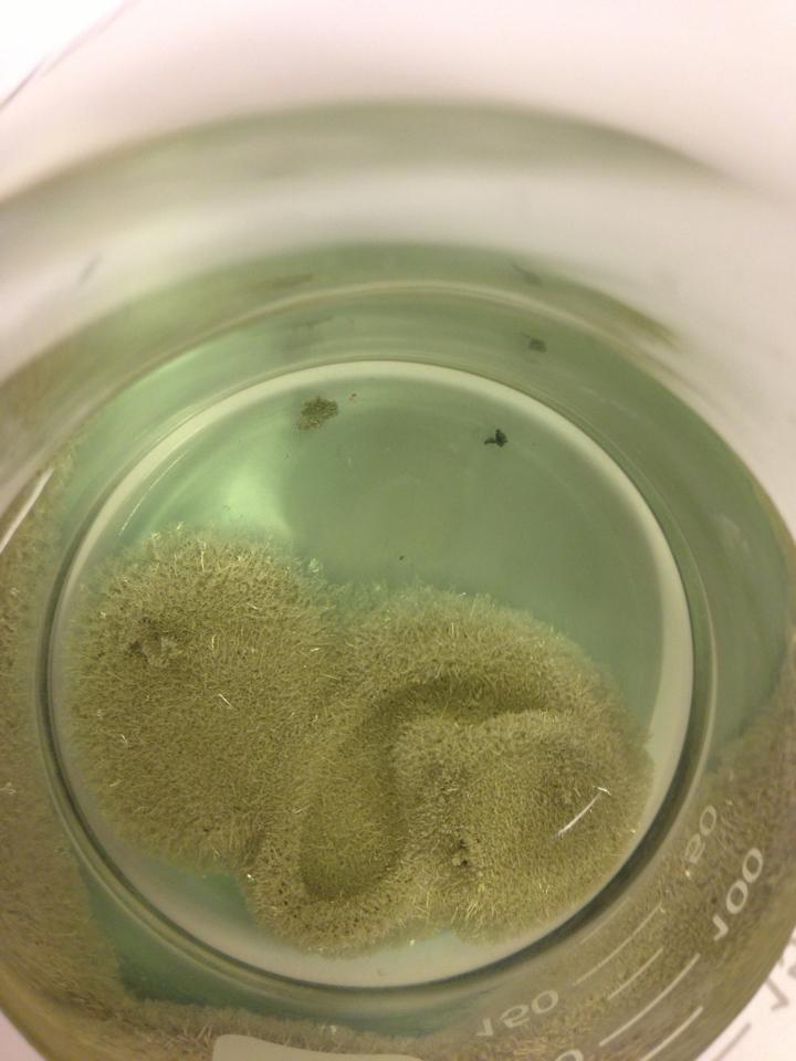 smelting av polene