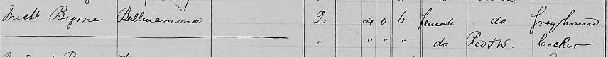 Michael Byrne, Dog Licence Register (greyhound), Avoca , 1891