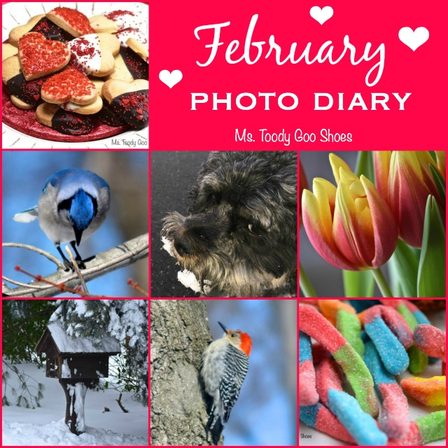 February 2015 Photo Diary | Ms. Toody Goo Shoes