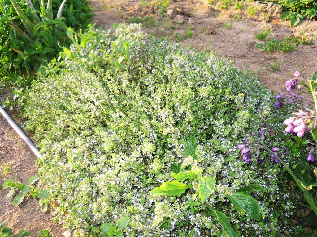 Huerto ecol gico en la terraza o balc n de casa plantas - Huerto de plantas aromaticas ...
