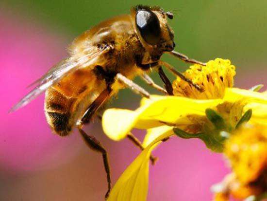 Cách sử dụng phấn hoa thiên nhiên hiệu quả