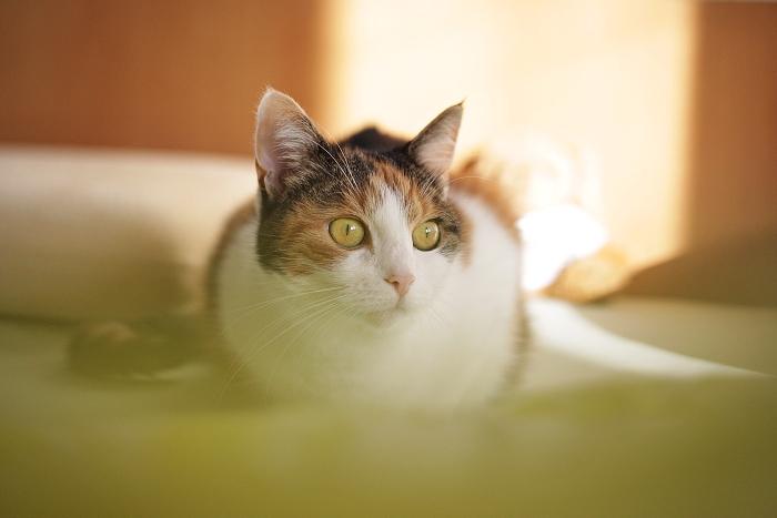 černobílá kočka, roztomilé kočičky, modní blogerka, blogerka z prahy