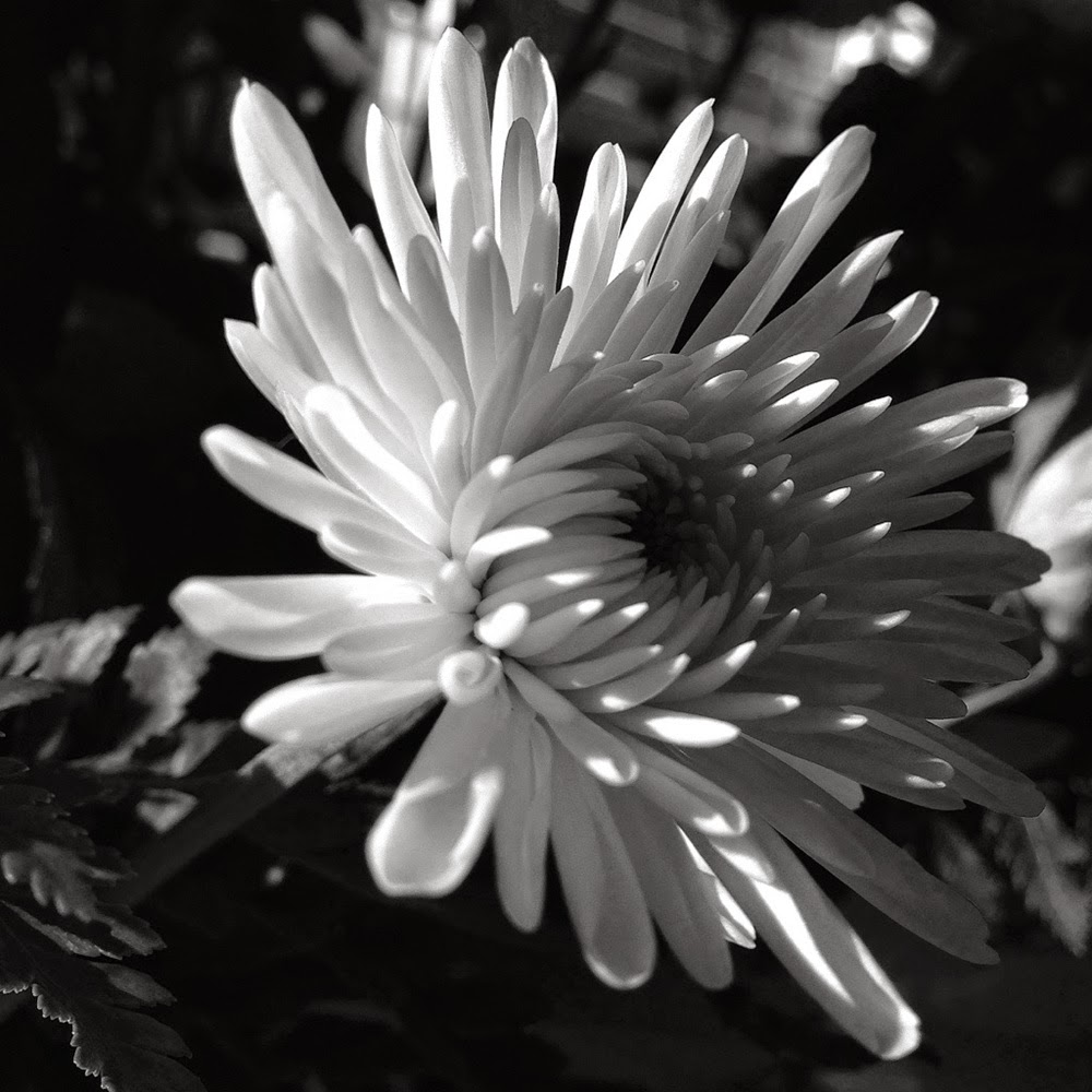 Flower drawings in black and white many flowers flower drawings in black and white flowers black and white mightylinksfo