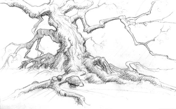 Contour Line Drawing Tree : World in my pocket drawing how to working with purpose