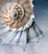 Beautiful Shell