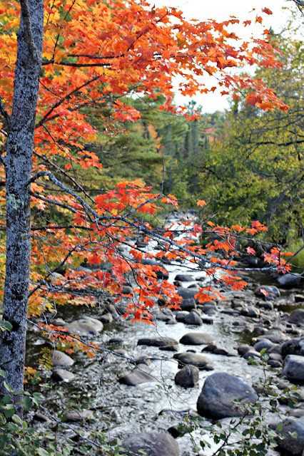 Fall tree in the Adirondacks-www.goldenboysandme.com