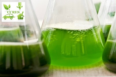 PROJECT CCRES ALGAE BIOFUEL