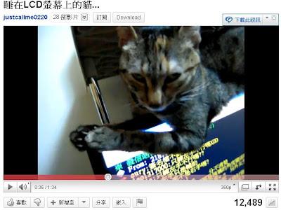 貓界小龍女 LCD 臥細繩而眠