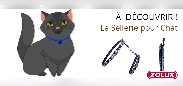 Sellerie pour chat Véto Malin