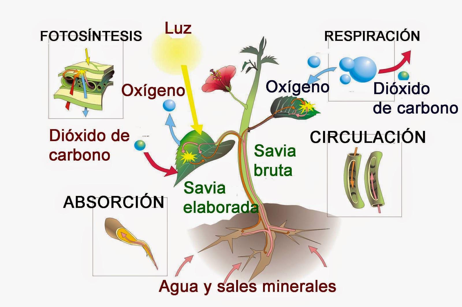 http://v2.educarex.es/web/fsanchezm02/las-plantas