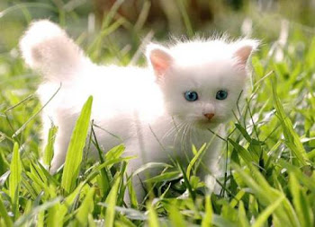 cute cat!!!
