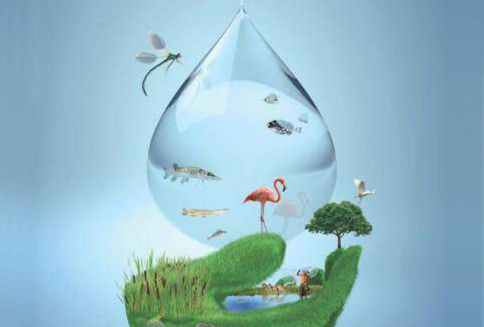 Como Hacer Un Cartel Sobre El Cuidado Del Ambiente