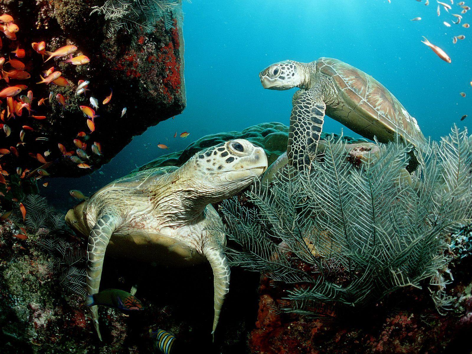 animal zoo life turtles pet turtles sea turtles