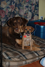 Our furry friends: Fudge (lab cross) & Ginger (puggle)