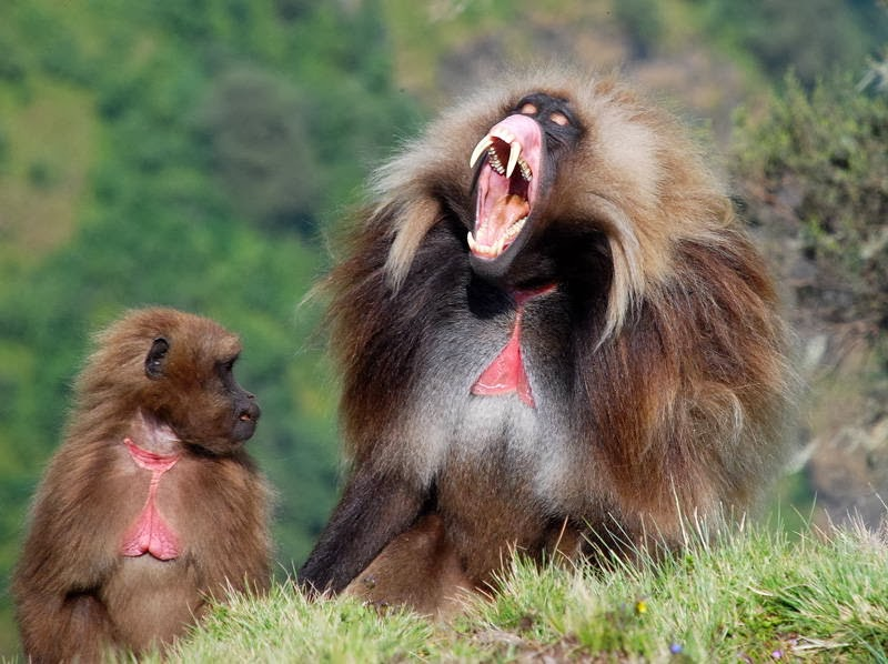 Funny animals of the week - 7 March 2014 (40 pics), scary looking monkey