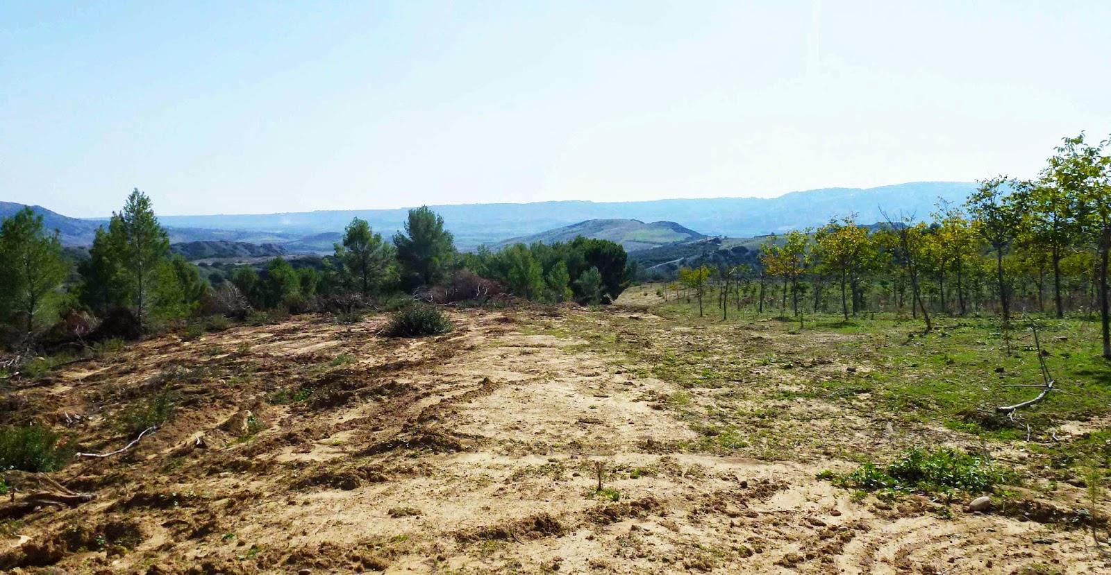 Radiolasernews disboscamenti sbancamenti di terreno e for Consolidare un terreno