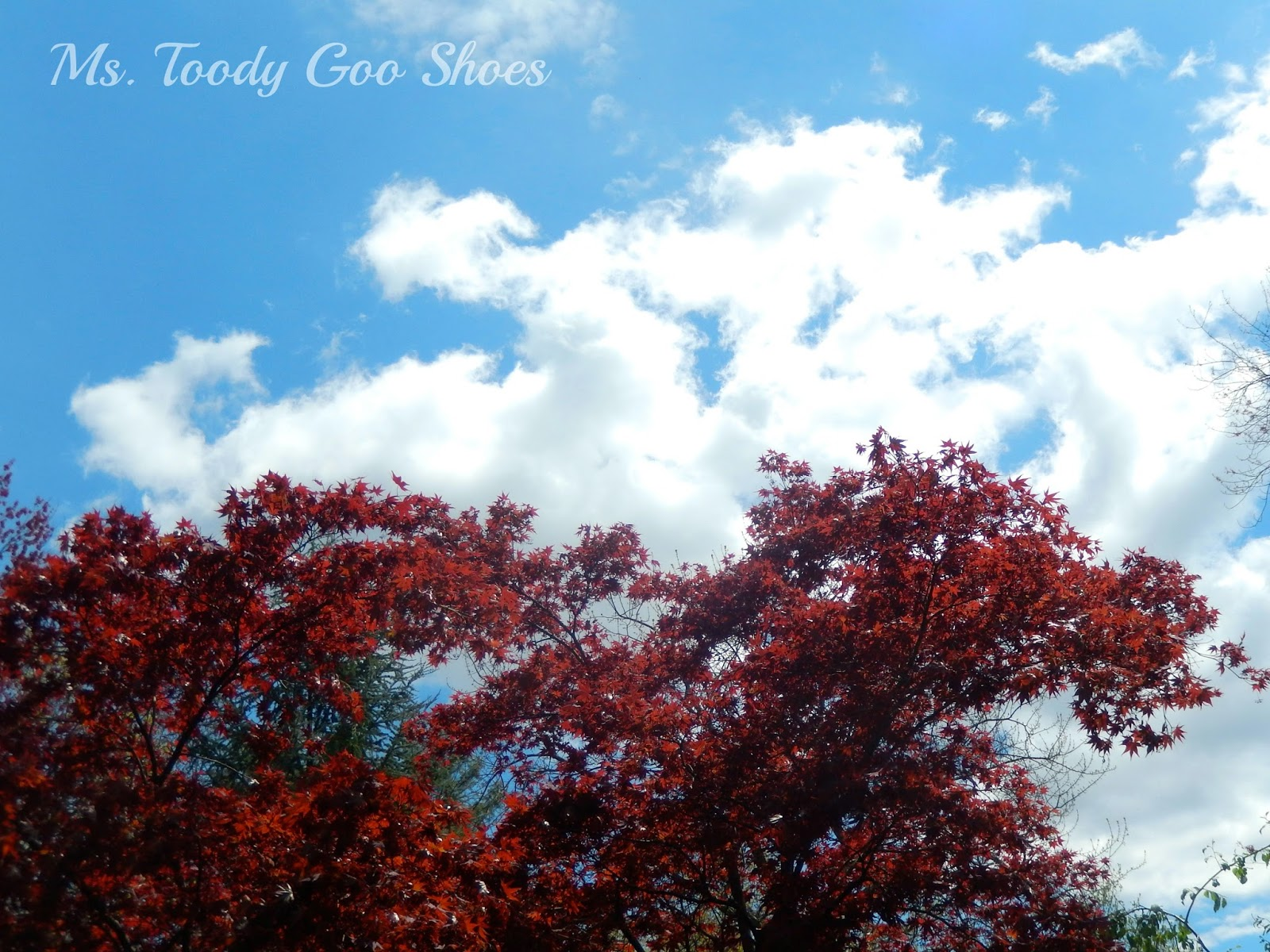 My Photo Diary - May  --- Ms. Toody Goo Shoes