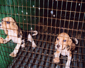 SIGN THE BOYCOTT MARSHALL PET PETITION
