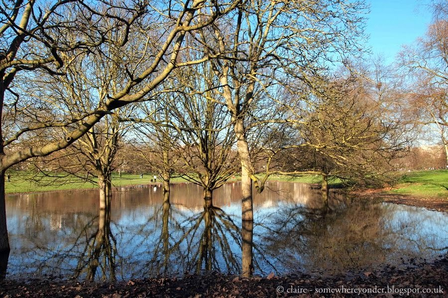 tree reflections - Hyde Park