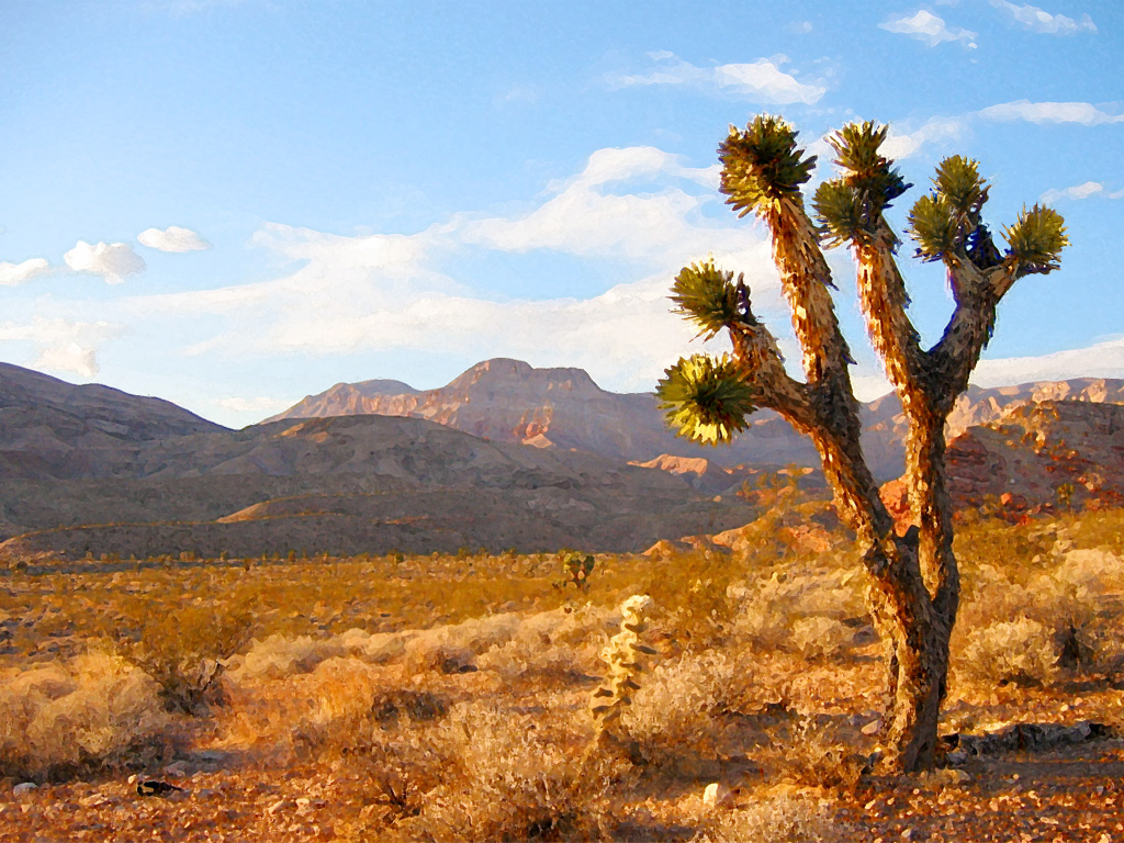 tough love travel your private swath of sand in the mojave desert