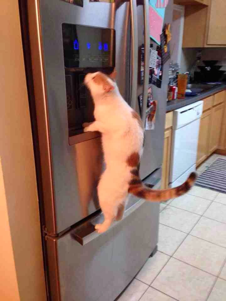 Funny cats - part 82 (40 pics + 10 gifs), cat photo, cat drinks from water dispenser
