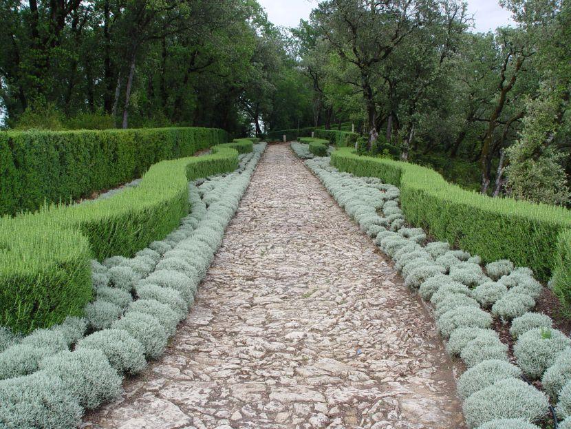 Future plants by randy stewart santolina for Landscape gardening company