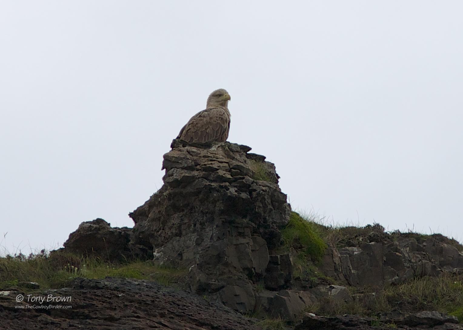 Sea Eagle, Isle of Skye, Rum