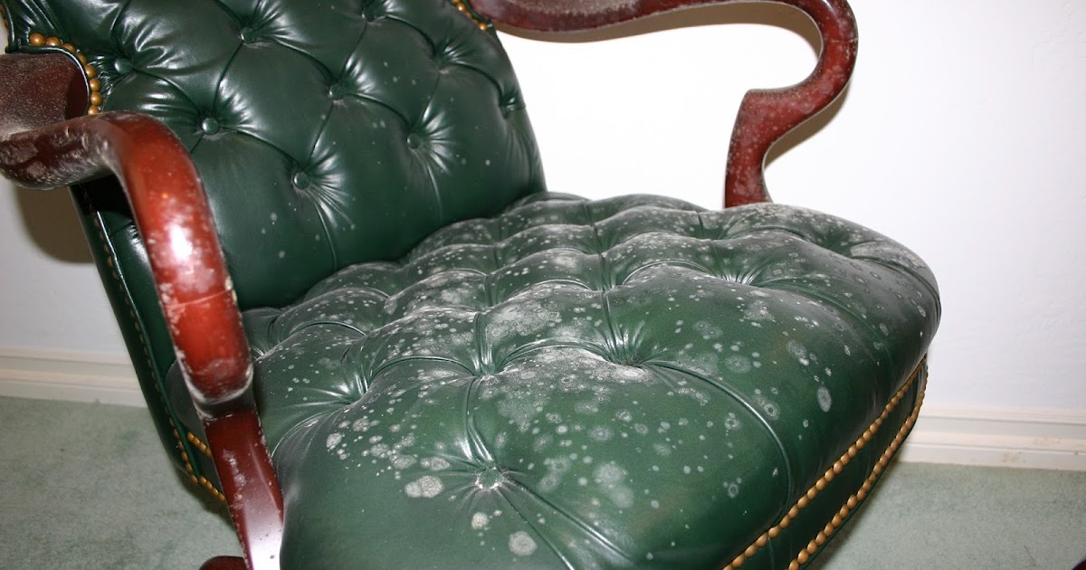 Remove All Stains Com How To Remove Mold From Leather