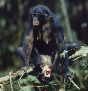5 bonobos sexual 10 of the Weirdest Animal Instincts and Behaviors