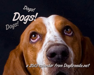 2013 Dogs! Dogs! Dogs! calendar from DogBreedz.net