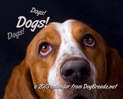 2013 Dogs! Dogs! Dogs! calendar from DogBreedz.net